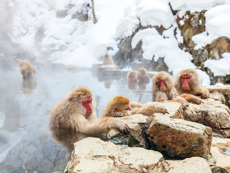snow-monkeys.jpg